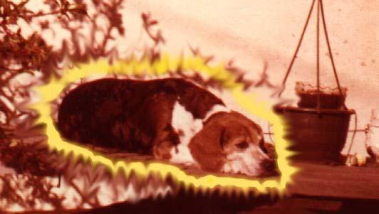 Daiquiri the Radioactive Beagle