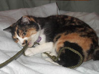 Kitty fights a rope!