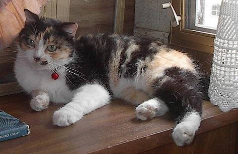 Caldecat in April 2007