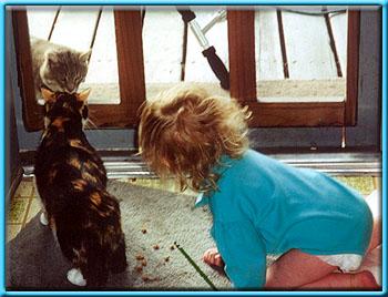 Two cats face each other through a screen door