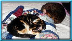 Let sleeping cats lie like a dog