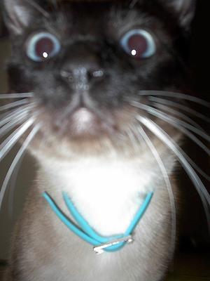 Closeup of Seer's face