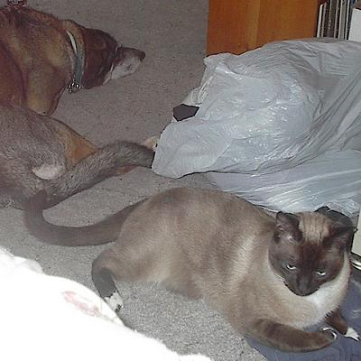 photograph of cat and dog