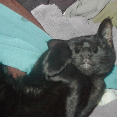 little black kitty asleep