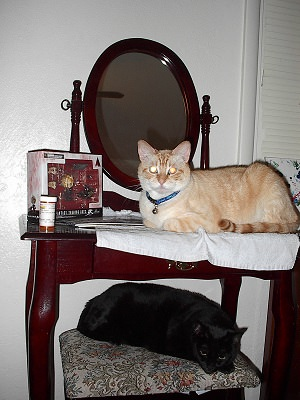 Sunny Cat on the nightstand, black kitty Magick on the stool