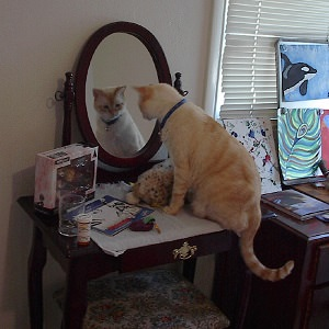 Sunny cat admiring himself in the mirror