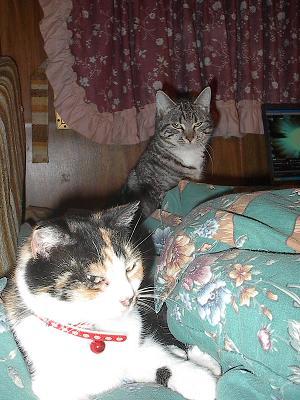 Luna Cat rising behind Caldecat