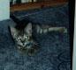 Pandora the kitty!