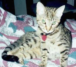 Cute Pandy cat